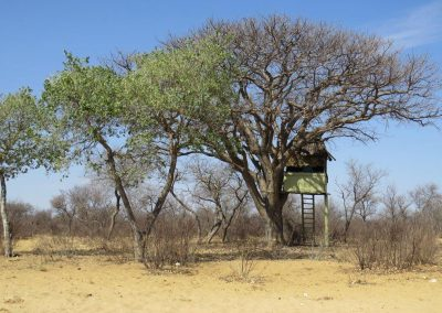 Omatjete Safaris - Simondeum